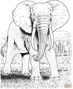 Asian Elephant coloring