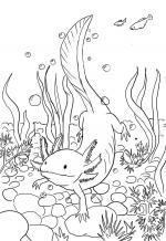 Axolotl coloring