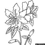Rhododendron coloring