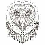 Barn Owl coloring