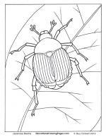 Beetles coloring