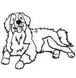 Bernese Mountain Dog coloring