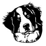 Bernese Mountain Dog svg