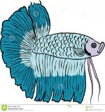 Siamese Fighting Fish clipart