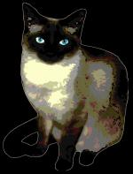 Birman Cat svg