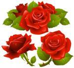 Black Rose svg