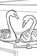 Black Swan coloring