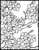 Blossom coloring