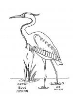 Heron coloring
