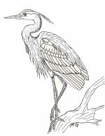 Blue Heron coloring