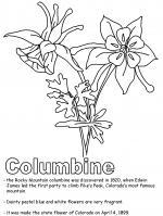 Colorado Blue Columbine coloring