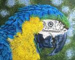 Blue-fronted Parrot svg