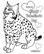 Bobcat coloring