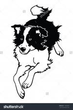 Border Collie svg