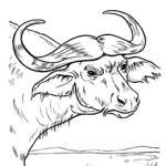 Buffalo coloring