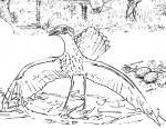 Bush Stone-curlew coloring