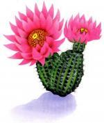 Cactus Blossom clipart