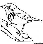 Warbler coloring