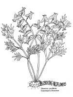 Carnivorous Plant coloring