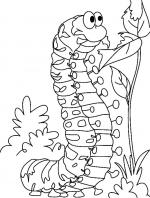 Caterpillar coloring