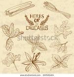 Caucasus coloring