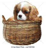 Cavalier King Charles clipart