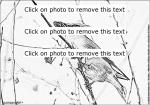 Cedar Waxwing coloring