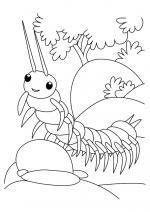 Centipede coloring