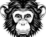 Chimpanzee svg