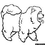 Chow Chow coloring