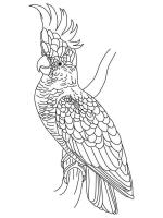 Cockatoo coloring