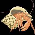 Crustacean svg