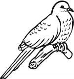 Cuckoo coloring