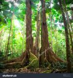 Daintree Rainforest clipart