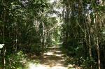 Daintree Rainforest svg