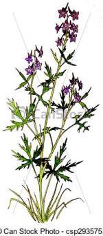 Delphinium clipart