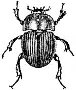 Dung Beetle clipart