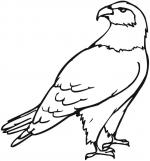 Eagle coloring