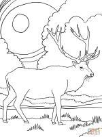 Elk coloring