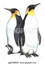 King Penguin clipart