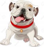 English Bulldog clipart
