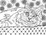 Feline coloring