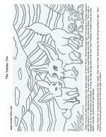 Fennec Fox coloring