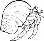 Hermit Crab coloring