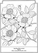 Florais coloring