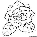Gardenia coloring