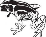 Frog svg