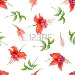 Fuchsia clipart