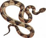 Tiger Snake clipart
