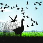 Geese Migration clipart